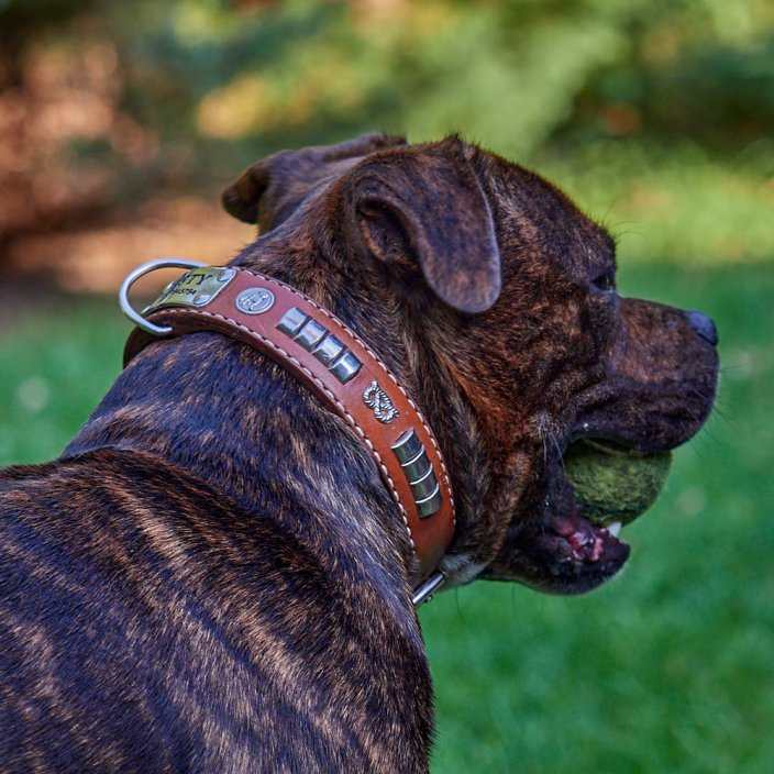 Snake Tail Classic Collar