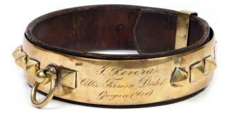 The History of Dog Collars
