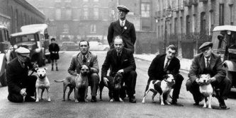 THE FIRST STAFFIE BREEDERS' CLUB AND OFFICIAL RECOGNITION 80 YEARS AGO